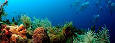 Coral at Florida Keys National Marine Sanctuary