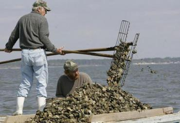Oystermen, a dying breed on the Apalachicola River