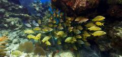 Key West's coral die-off